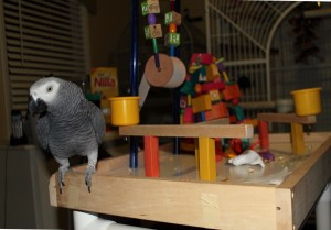 Larry Bird on his New FunTime Birdy Playgym